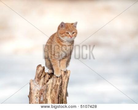 A yellow kitten sits on tree stump after snowstorm poster