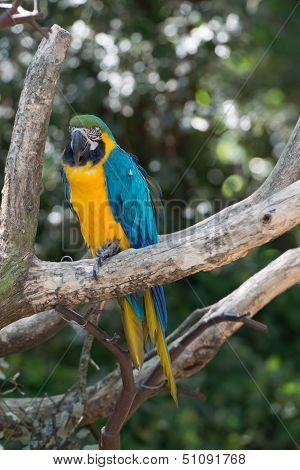 Ara Bird (closup View)