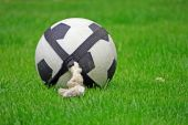 Football on a rope dog toy and lush green grass poster