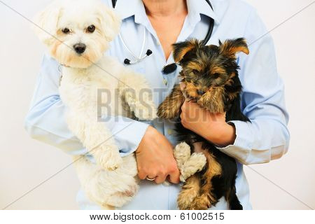 Veterinary treatment - lovely puppies and friendly veterinary, veterinary care concept poster