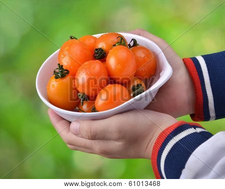 Cherry tomatoes in bowl with hand