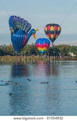 Balloons Over Waikato