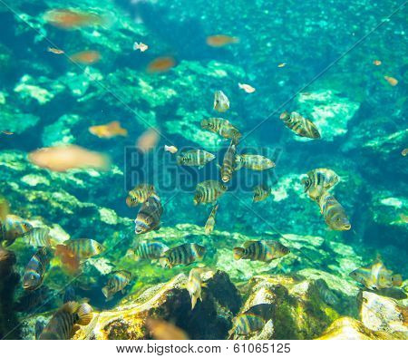 fish under water poster