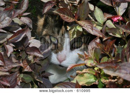 poster of cat hidden behind plants