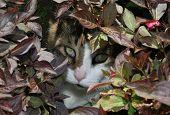 cat hidden behind plants poster
