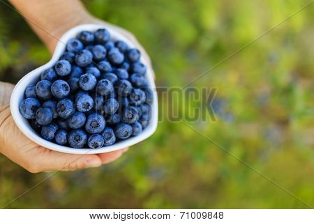 Blueberries - female hands holding ripe blueberries in bowl, space for text
