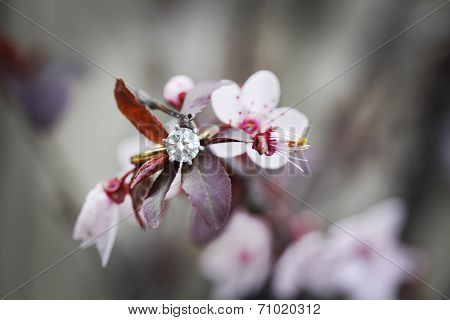 Ring on flowering plum