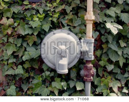 Vines And Gas Meter
