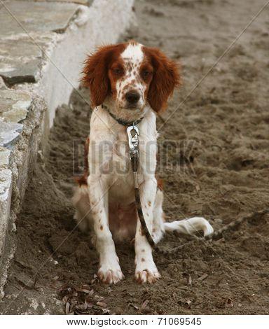 dog sitting on the beach waiting something.  poster