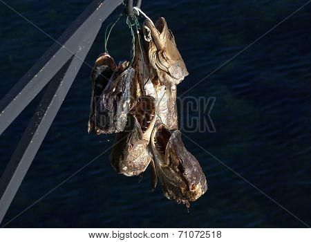 Trofeo di pesca