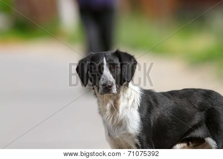 Feral Dog Portrait On The Street