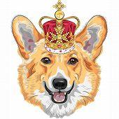 color sketch of the dog Pembroke Welsh corgi breed in gold crown poster