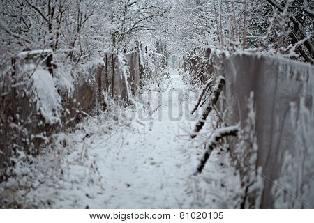Winter Path Way