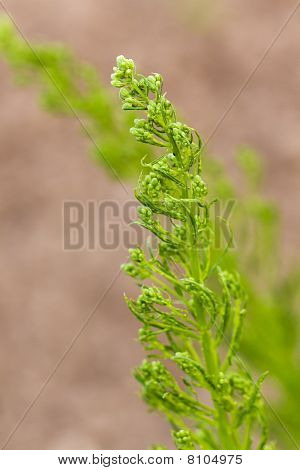 Clusters of long, un-mowed grass, waving in the breeze.  ,close up