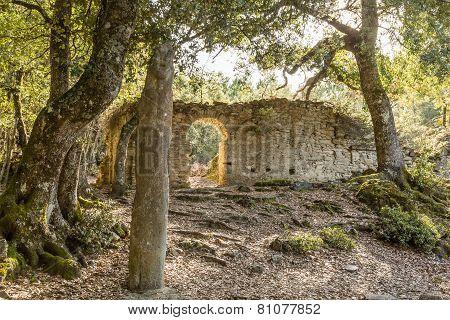 Stone Menhir De Petra Frigiata In Corsica