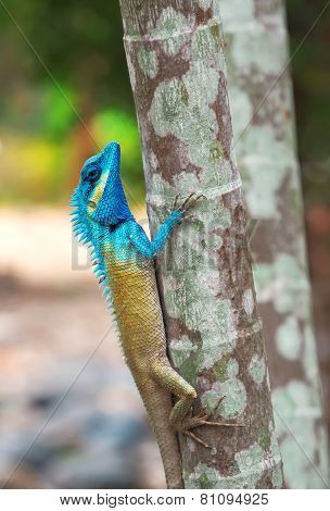 Tropical Lizard On The Tree