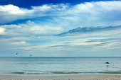 The small waves from the gulf of mexico crash on the shore at bonita beach in southwest florida at early morning as pelicans fly by poster