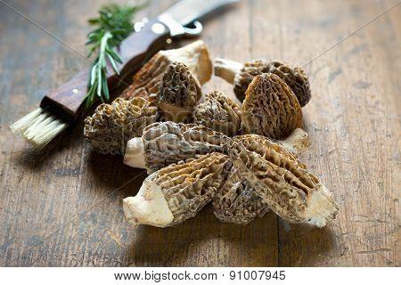 Fresh Morelle Mushrooms