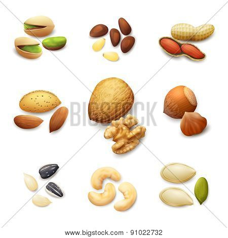 Nuts Realistic Set