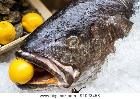 Meagre Fish With A Lemon In The Mouth