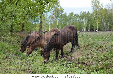 Wild ponies on Chailey common