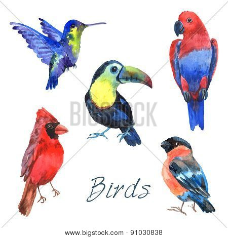 Exotic tropical birds watercolor icons set