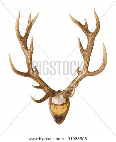 Antlers from a huge stag mounted on wood board