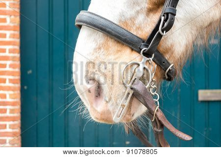 Horse With Bridle