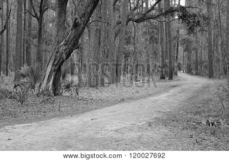 A road through the woods