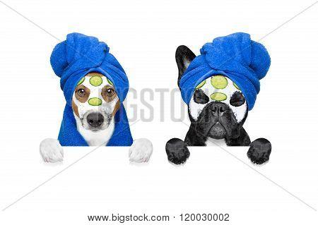 Wellness Beauty Mask Row Of Dogs