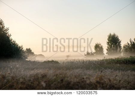 Foggy Morning In The Meadow