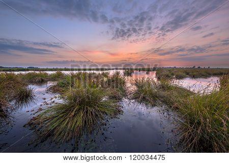 Landscape Image Of Wetland