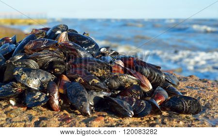 Mussels Against A Stormy Sea