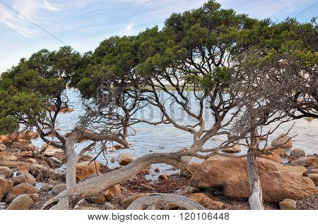 Bunker Bay: Low-Lying Coastal Trees