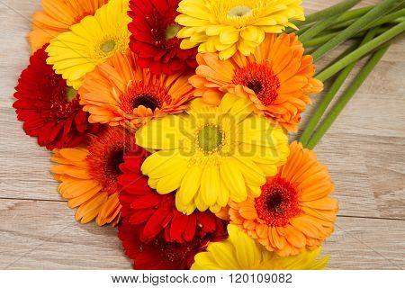gerberas flower