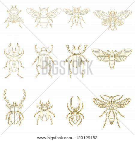 Set Of Insects In Vector.