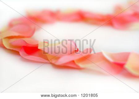 Rose Petals 1 F