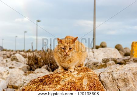 A cat of color brown on a rock