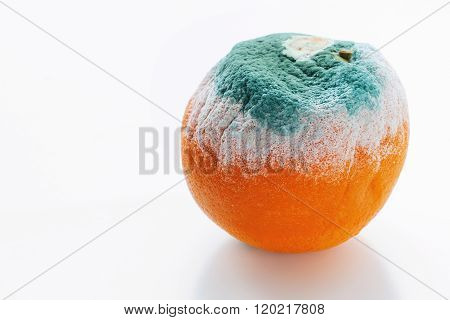 Bad mouldy orange on white background which is dangerous to eat