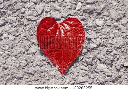 Heart Shape Leaf