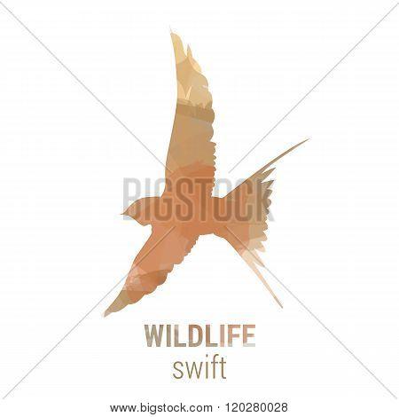 Wildlife Banner - Bird Swift