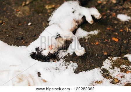 Cat freezes to death in winter