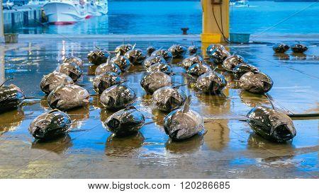 WAKAYAMA JAPAN - NOVEMBER 20 2015:  Katsuura Nigiwai Market is the biggest fish market in Wakayama prefecture Maguro tuna auctions held every morning started at 7.30 daily