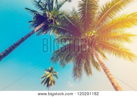Coconut Palm Tree With Vintage Effect.
