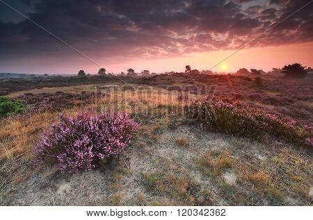 Purple Summer Sunrise On Heathland