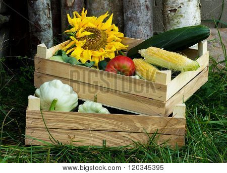pictured are two crates of vegetables