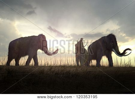 Woolly Mammoths In The Sunset