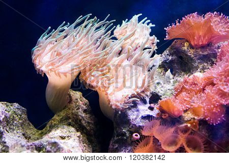 Underwater view of marine life with anemone and exotic fish