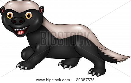 Cartoon funny honey badger isolated on white background