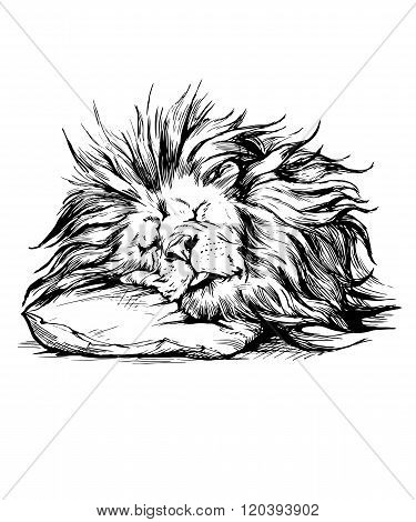 Vector hand drawn realistic lion sleeping character.